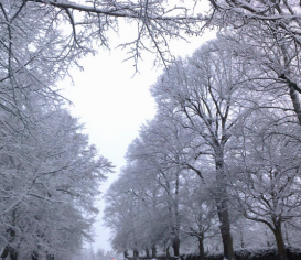Vinter foto Ronny de Silva